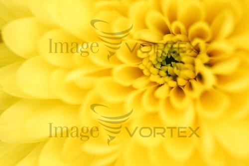 Flower royalty free stock image #391156682
