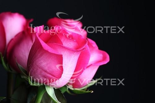 Flower royalty free stock image #393380581