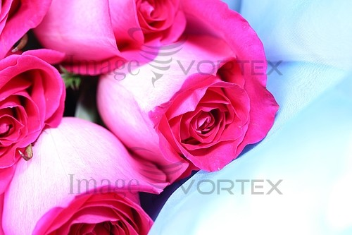 Flower royalty free stock image #393397846