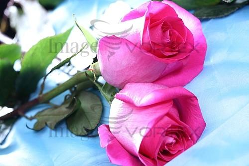 Flower royalty free stock image #393405504