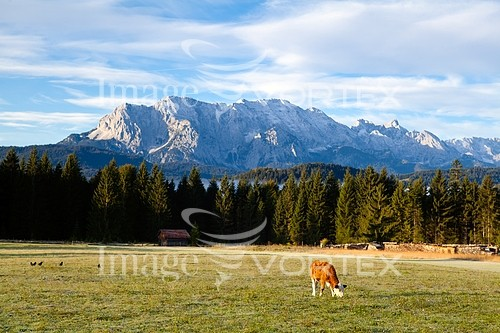 Animal / wildlife royalty free stock image #395069677