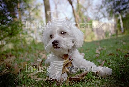 Pet / cat / dog royalty free stock image #395263534