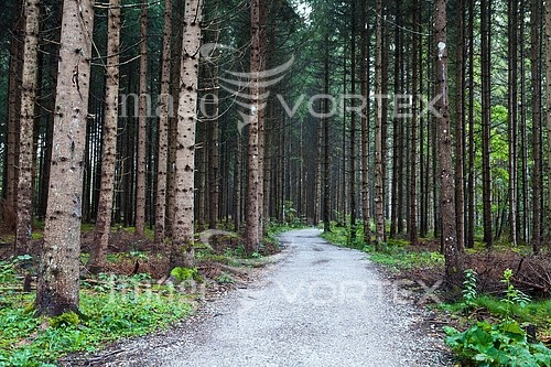 Park / outdoor royalty free stock image #395592230