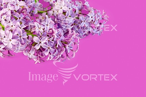 Flower royalty free stock image #407587654