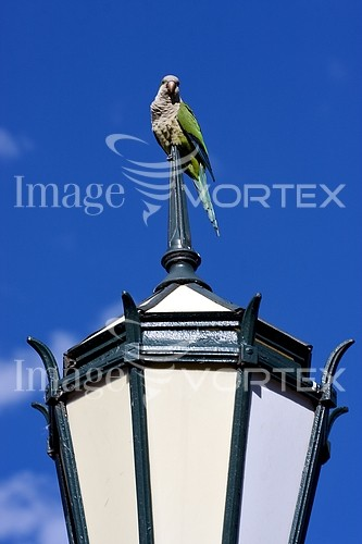 Bird royalty free stock image #408005565