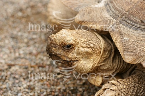 Animal / wildlife royalty free stock image #409239251