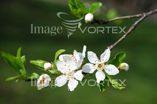 Nature / landscape royalty free stock image #410617734