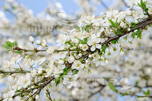 Nature / landscape royalty free stock image #410626785