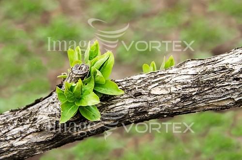 Nature / landscape royalty free stock image #410634451