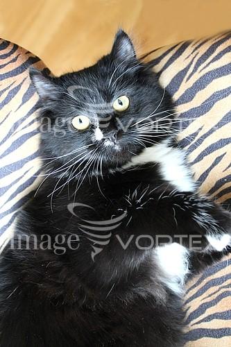 Pet / cat / dog royalty free stock image #424384671