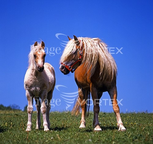Animal / wildlife royalty free stock image #439798327