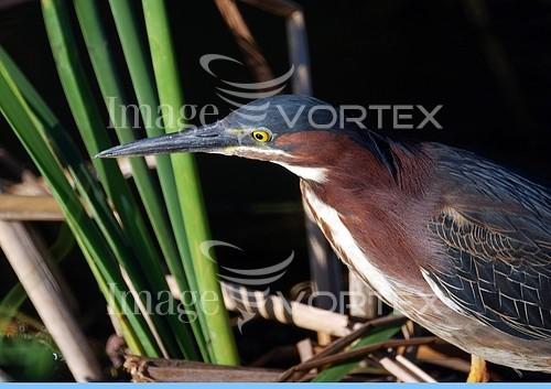 Bird royalty free stock image #454698006