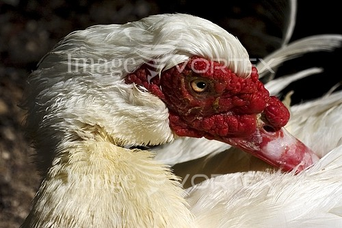 Animal / wildlife royalty free stock image #456029844