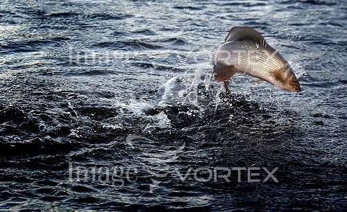 Sports / extreme sports royalty free stock image #459725727