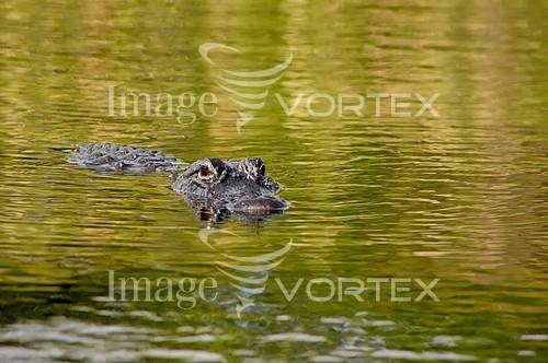 Animal / wildlife royalty free stock image #472734863