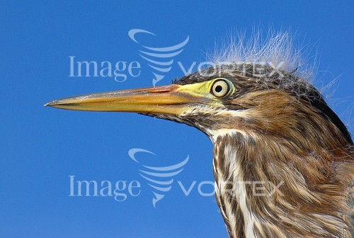 Bird royalty free stock image #483378393