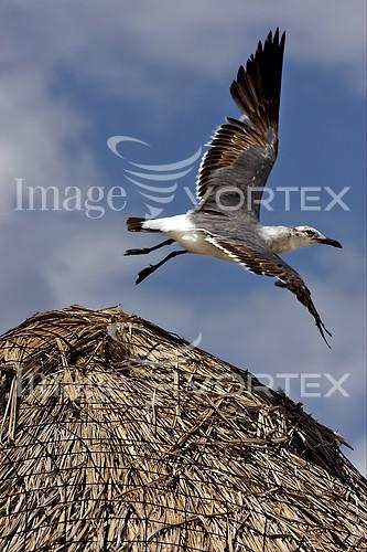Bird royalty free stock image #483844315