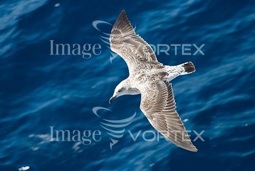 Bird royalty free stock image #515353927