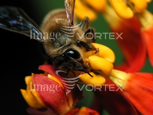 Insect / spider royalty free stock image #518233132