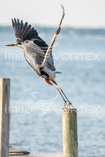 Bird royalty free stock image #528486895