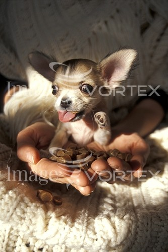Pet / cat / dog royalty free stock image #534914833