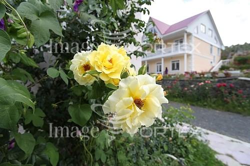 Flower royalty free stock image #539434382