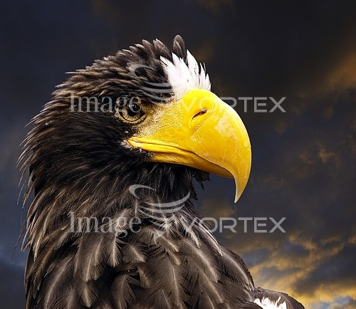Bird royalty free stock image #539985488