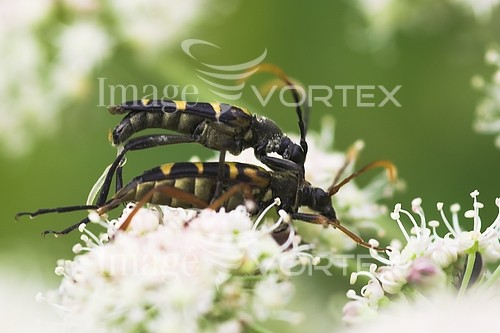 Insect / spider royalty free stock image #546853563