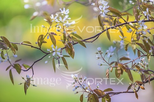 Park / outdoor royalty free stock image #549590473
