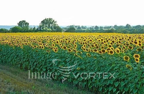 Flower royalty free stock image #557059232