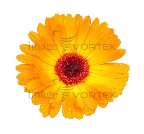 Flower royalty free stock image #559191914