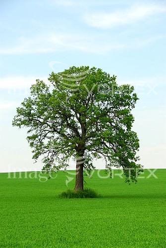 Nature / landscape royalty free stock image #568866652