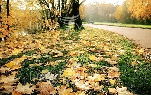 Nature / landscape royalty free stock image #570404864
