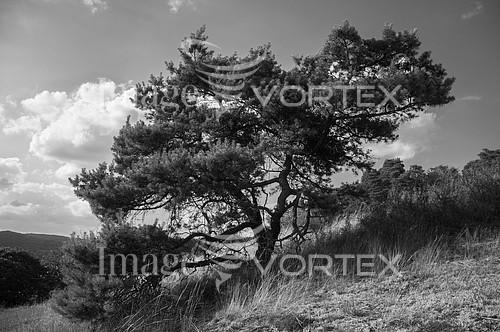 Nature / landscape royalty free stock image #575482856