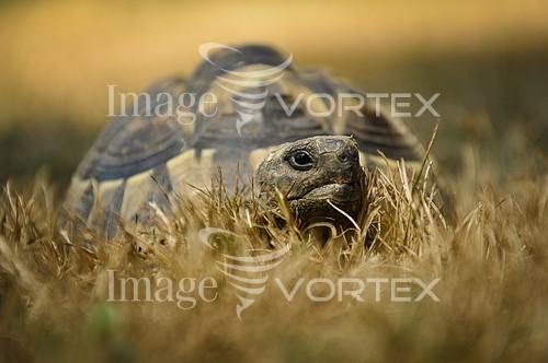 Animal / wildlife royalty free stock image #575458531