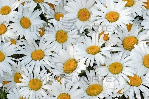 Flower royalty free stock image #583863670