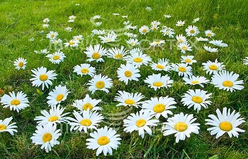 Flower royalty free stock image #584248469
