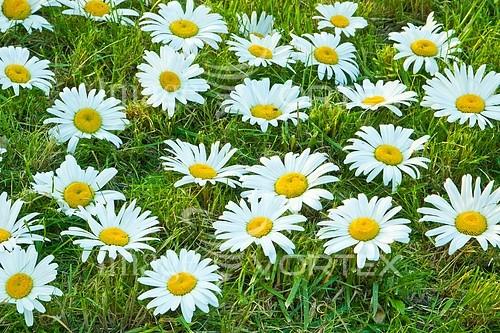 Flower royalty free stock image #584802150