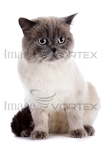 Pet / cat / dog royalty free stock image #589622750