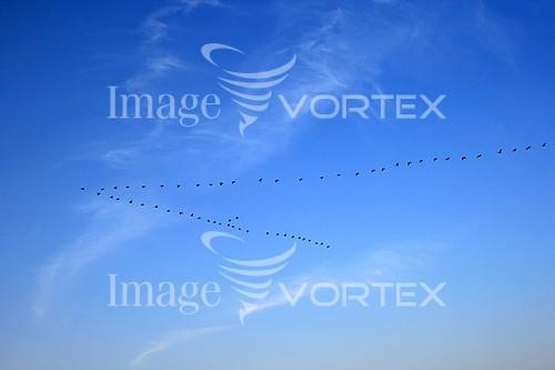Bird royalty free stock image #600294086