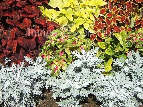 Nature / landscape royalty free stock image #611710700