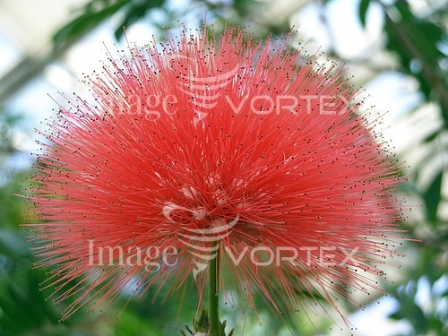 Flower royalty free stock image #632957299