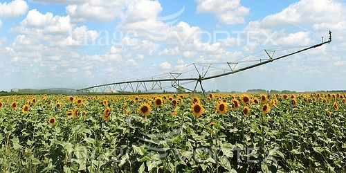 Industry / agriculture royalty free stock image #633434534