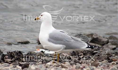 Bird royalty free stock image #645788151