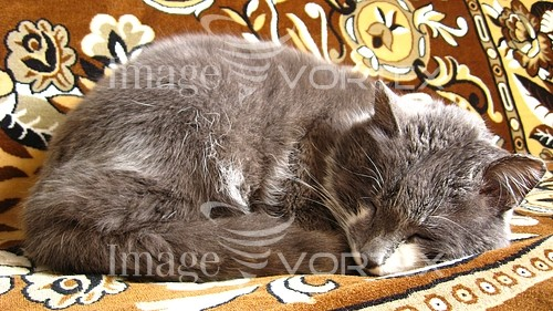 Pet / cat / dog royalty free stock image #652247735