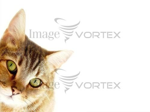 Pet / cat / dog royalty free stock image #715321095