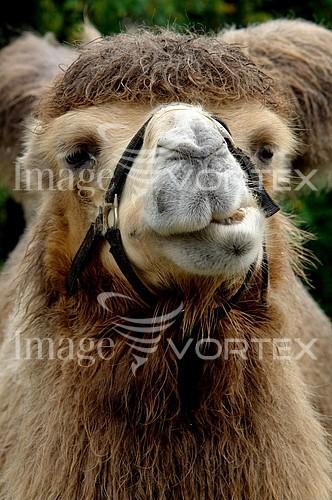 Animal / wildlife royalty free stock image #739687295