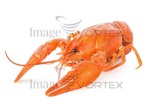 Food / drink royalty free stock image #741695413