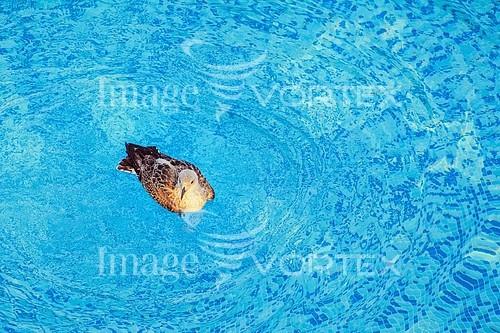 Bird royalty free stock image #758954625