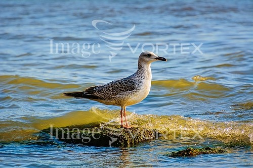Bird royalty free stock image #759702533